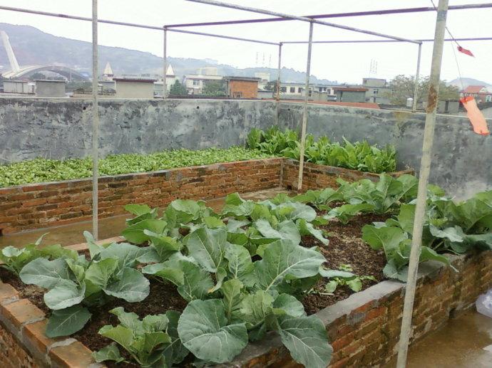 赞赏的人认为,楼顶天台种菜挺好的,夏天温度高,楼顶被太阳晒得可以